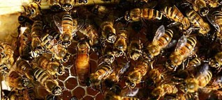 Die Bienenkönigin - Brüder Grimm