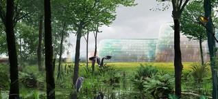 """Berliner Architektin: """"Das Tempelhofer Feld als Naturreservat - warum nicht?"""""""