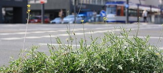 Die Geheimnisse der Stadtpflanzen