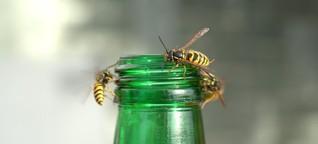 Wespen und Bienen: Ohne Stiche durch den Sommer