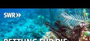 Rettung für die Korallenriffe?   SWR2 Wissen Audiopodcast