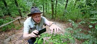 Youtube-Kanal über den Wald: Förster Klaus geht online