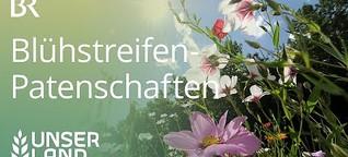 Gegen das Artensterben: Blühstreifen-Patenschaften