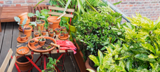 Nachhaltigkeit im Frühling: Balkon mit Wildpflanzen begrünen