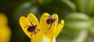 Wirksame Mittel gegen Zecken, Mücken und Co. - Bieten ätherische Öle und Hausmittel vergleichbar guten Schutz wie Produkte aus der Drogerie?
