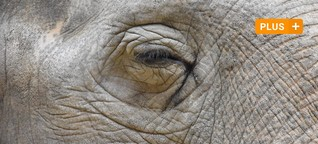 Ältester Elefant Europas: Die bewegende Geschichte der Augsburgerin Targa