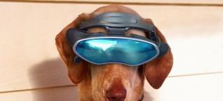 Hightech für Vierbeiner: US-Militär testet VR-Brillen für Hunde - WELT