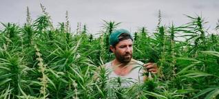 Cannabisanbau: So viel Ärger mit dem Hanf