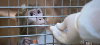 Tierversuche: EU erzwingt in Deutschland strengere Regeln