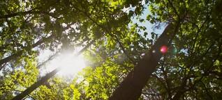 Panorama - Die Reporter: Das Geschäft mit den Bäumen