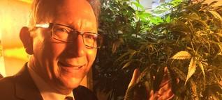 Cannabis: CDU-Gesundheitspolitiker will Hanf freigeben
