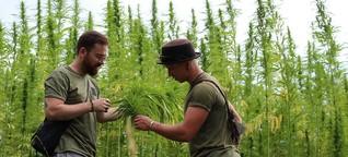 """Cannabis-Unternehmen: """"Als wären wir Schwerverbrecher"""""""