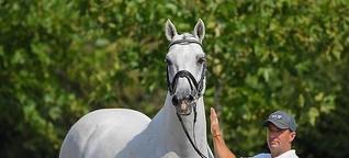Wie der Pferdeflüsterer aus dem Rottal wieder Erfolge feiert